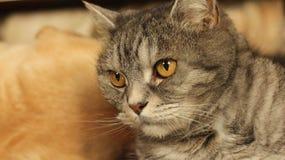 Gatto che si trova sul pavimento a casa 10 Fotografia Stock
