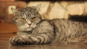 Gatto che si trova sul pavimento a casa 9 Fotografia Stock