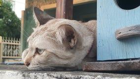 gatto che si trova sulla cima del recinto della casa fotografie stock libere da diritti