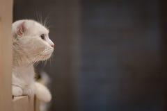 gatto che si trova sulla tavola di legno fotografia stock