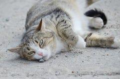 Gatto che si trova sulla terra Fotografie Stock Libere da Diritti