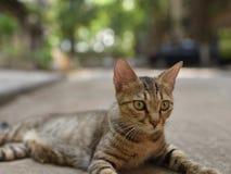 Gatto che si trova sulla terra con gli alberi verdi Immagine Stock