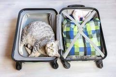 Gatto che si trova in valigia imballata Fotografia Stock