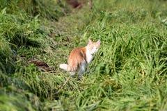 Gatto che sta nell'erba verde Immagine Stock