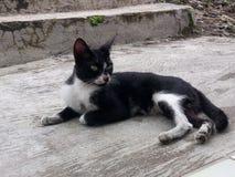 Gatto che sta rilassandosi e foto Fotografie Stock