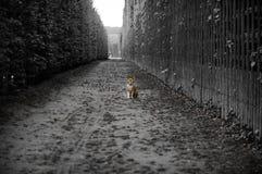 Il gatto di Versailles Fotografie Stock Libere da Diritti