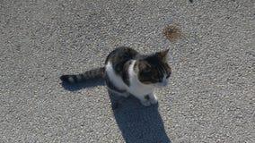 Gatto che sta vivendo sull'isola fotografia stock libera da diritti