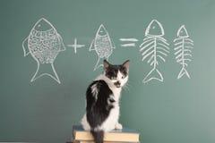 Gatto che studia aritmetica fotografie stock