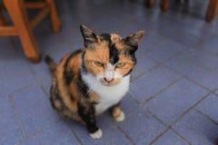 Gatto che vi guarda Immagine Stock