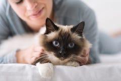 Gatto coccolo sul letto fotografia stock
