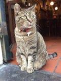 Gatto in Coffeeshop a Amsterdam Sguardo più attento del proprietario Fotografie Stock Libere da Diritti