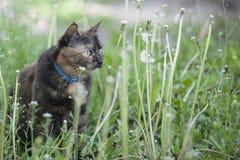 Gatto colorato fra i denti di leone Fotografie Stock