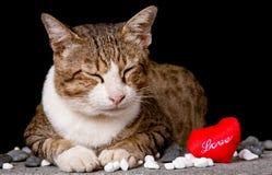 Gatto con amore a forma di del cuore rosso Fotografia Stock