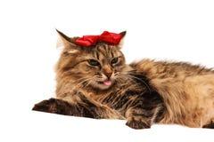 Gatto con con un arco rosso Immagini Stock Libere da Diritti