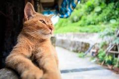 Gatto con fondo piacevole Fotografie Stock Libere da Diritti
