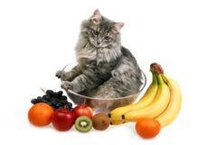 Gatto con frutta Immagine Stock