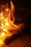 Gatto con gli indicatori luminosi fotografia stock