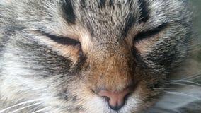 Gatto con gli occhi chiusi fotografia stock