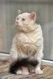 Gatto con gli occhi espressivi Fotografie Stock Libere da Diritti