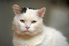 Gatto con gli occhi espressivi Fotografia Stock