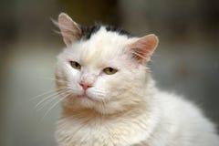 Gatto con gli occhi espressivi Immagine Stock