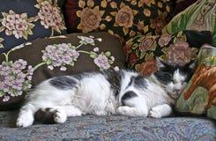 Gatto con i cuscini Fotografia Stock Libera da Diritti