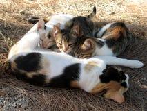 Gatto con i gattini Fotografia Stock Libera da Diritti