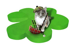 Gatto con i simboli nazionali della Scozia Fotografie Stock