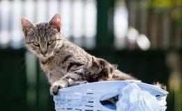 Gatto con i suoi gattini in un canestro Fotografia Stock Libera da Diritti