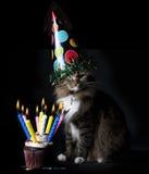 Gatto con il bigné di compleanno immagine stock