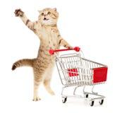 Gatto con il carrello di acquisto su bianco Fotografie Stock