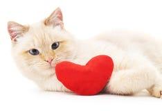 Gatto con il cuore del giocattolo Immagini Stock