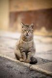 Gatto con il fuoco selettivo Immagine Stock