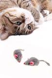 Gatto con il giocattolo del mouse Fotografia Stock