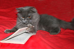 Gatto con il libro Fotografia Stock
