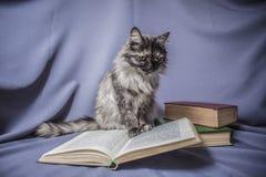 Gatto con il libro aperto fotografia stock libera da diritti