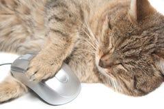 Gatto con il mouse del calcolatore Fotografie Stock Libere da Diritti