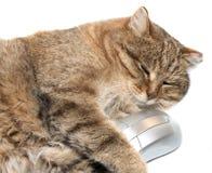 Gatto con il mouse del calcolatore Fotografia Stock