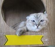 Gatto con il segno Fotografia Stock