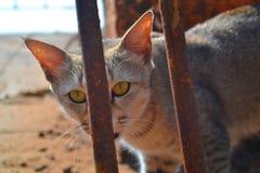 Gatto con l'occhio impressionante Fotografie Stock Libere da Diritti