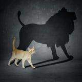 Gatto con l'ombra del leone Fotografia Stock Libera da Diritti