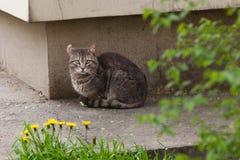 Gatto con l'orecchio girato Fotografia Stock Libera da Diritti