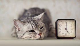 Gatto con l'orologio fotografia stock