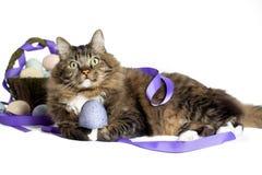 Gatto con l'uovo di Pasqua Fotografie Stock