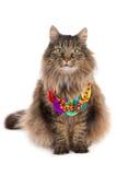 Gatto con la collana Immagini Stock Libere da Diritti