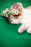 Gatto con la corona floreale Fotografia Stock Libera da Diritti