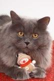 Gatto con la decorazione di natale Fotografia Stock