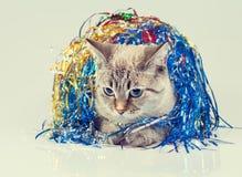 Gatto con la decorazione di Natale Immagini Stock