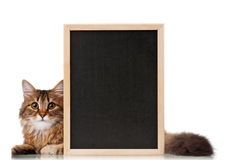 Gatto con la lavagna Fotografia Stock