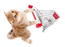 Gatto con la vista superiore del carrello di acquisto isolata su bianco Fotografia Stock Libera da Diritti